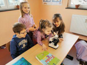 Mikroskopische Untersuchung eines Haares im Sachkundeunterricht